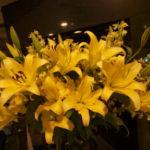 黄色い百合の花 -1