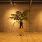 古代植物-1
