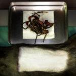 猫の腸閉塞-1